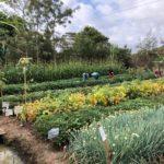 AGRA Watch Trip Blog:  Meeting Kenyan Agroecologists